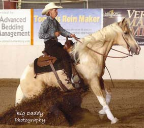 CCHA 2017 Fall Spectacular & Shows #8 & #9 @ International Agri-Center | Tulare | California | United States