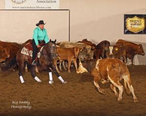 2018 CCHA Horse Show #1 @ Porterville Fairgrounds | Porterville | California | United States